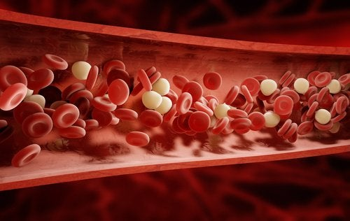9 ervas e especiarias ideais para limpar o sangue