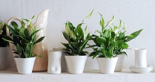 Plantas limpas