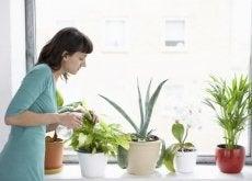 8 plantas que purificam o ar de sua casa