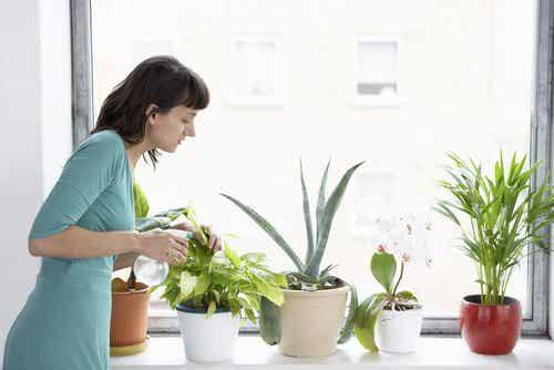 8 plantas que purificam o ar da casa