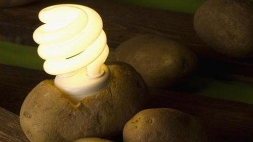 Descubra como iluminar seu quarto com uma batata