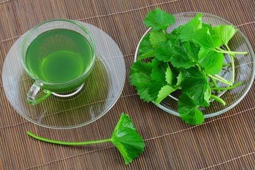Bebida à base de salsinha e hortelã para desintoxicar seu fígado