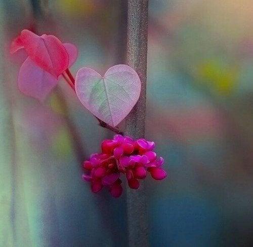Flores de cores vivas representando a paz interior
