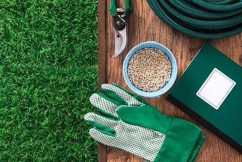 Dicas para cultivar mirtilos em casa