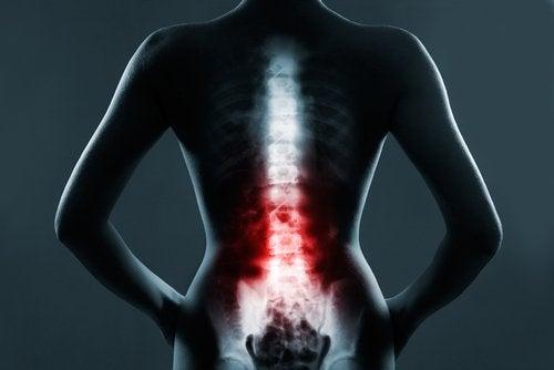 Relação da coluna vertebral e os órgãos