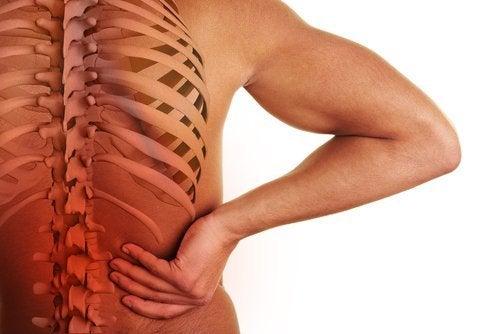 A relação entre a coluna vertebral e os órgãos