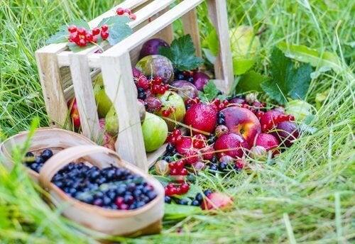 Amoras e maçãs para combater a prisão de ventre
