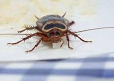 Há insetos em sua casa? Descubra como afastá-los