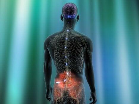 Dor neuropática na coluna