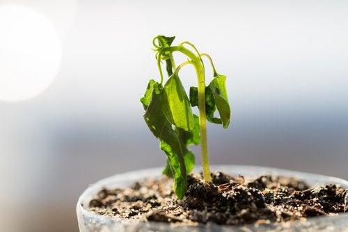 usos-canela-na-jardinagem