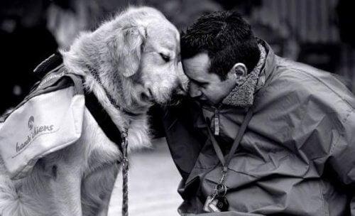 Tenha um cachorro e combata a nostalgia
