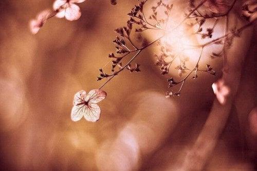 flor-delicada