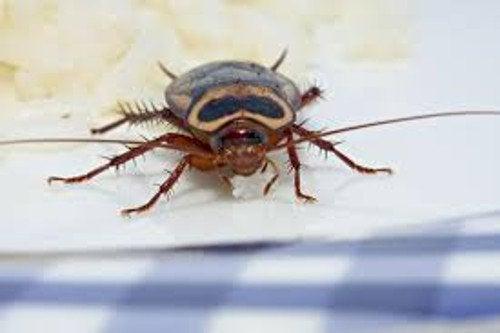 A fobia aos insetos é um dos tipos de ansiedade
