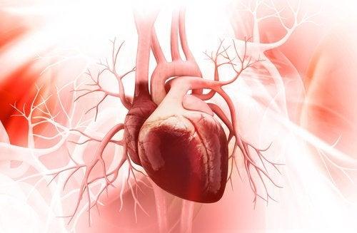 Imagem de coração, que pode se beneficiar da cerveja