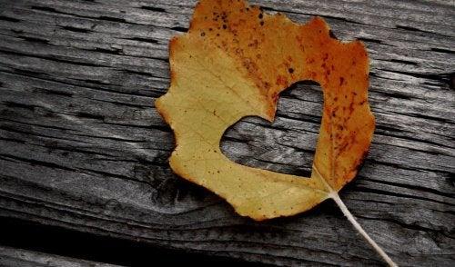 folha-de-outono-com-coracao