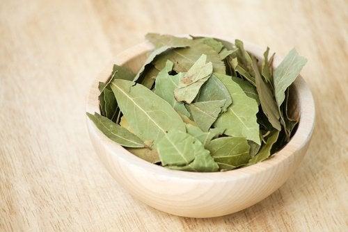 Vasilha com folhas de louro para preparar o óleo de louro