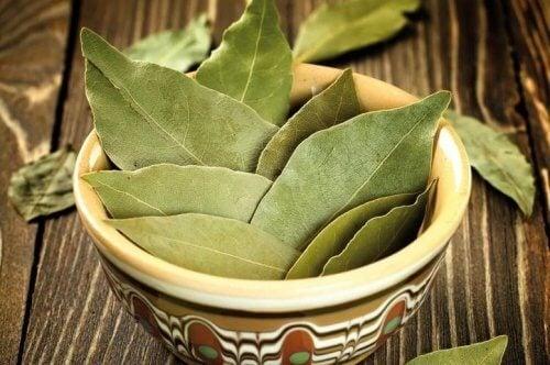 Folhas de louro para preparar óleo de louro