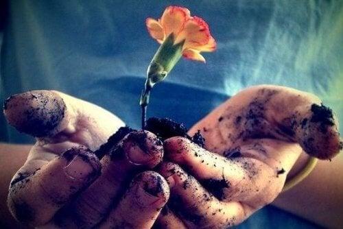 cultivo da flor representando a paciência e o amor no budismo