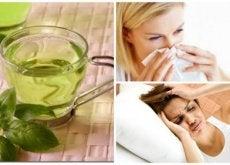 Chá de manjericão: 8 benefícios de consumi-lo todos os dias