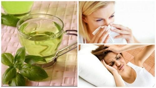 8 benefícios de consumir chá de manjericão todos os dias