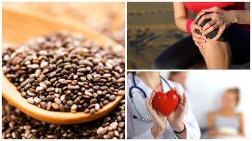 9 grandes benefícios oferecidos pelas sementes de chia