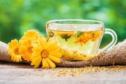 Chá de calêndula para aliviar o terçol
