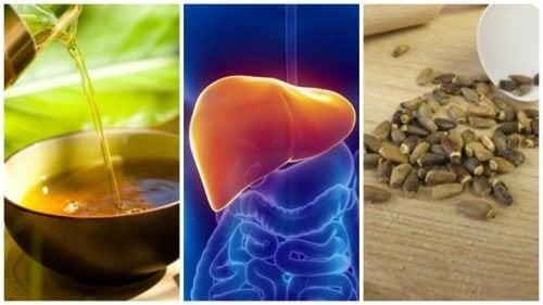 Combata o fígado gorduroso com estes 6 tratamentos alternativos