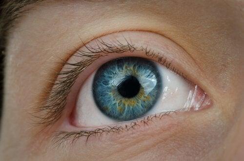Mirtilos favorecem a saúde ocular.