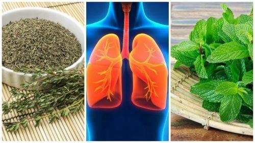 8 ervas que você pode usar para melhorar sua saúde pulmonar