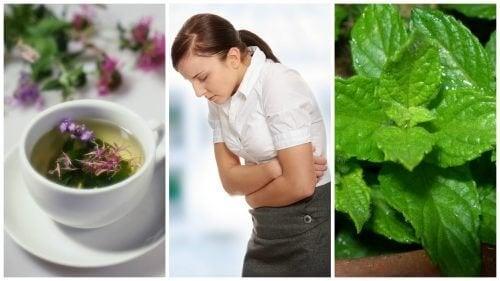 5 ervas curativas para aliviar a síndrome do intestino irritável
