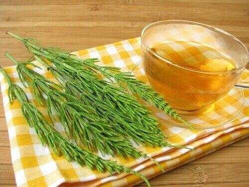 Chá de cavalinha contra a infecção urinária