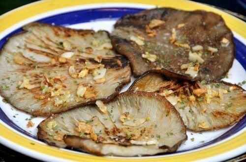 Fortaleça seu sistema imunológico de forma natural com cogumelo ostra
