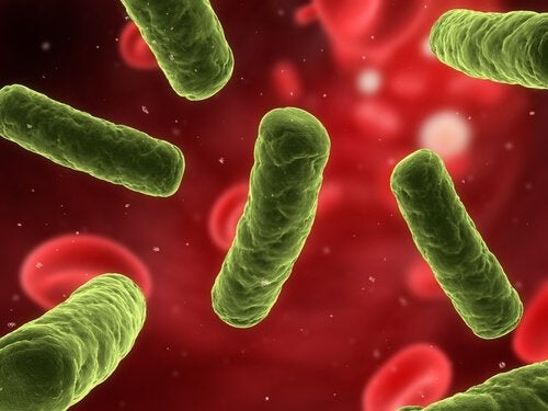 O sal marinho fortalece o sistema imunológico