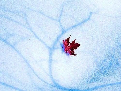 Folha resistindo momentos difíceis de inverno