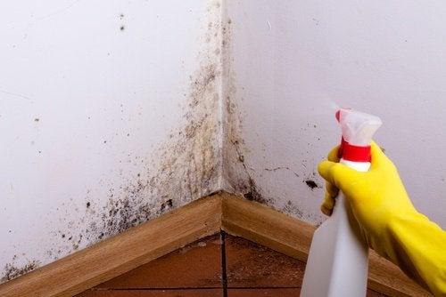 Solução de água e sal para combater o mofo nas paredes