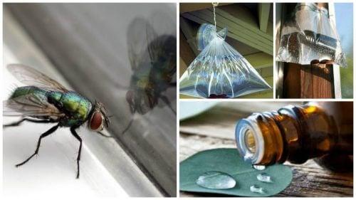 Combata as moscas do seu lar com estas 6 soluções caseiras