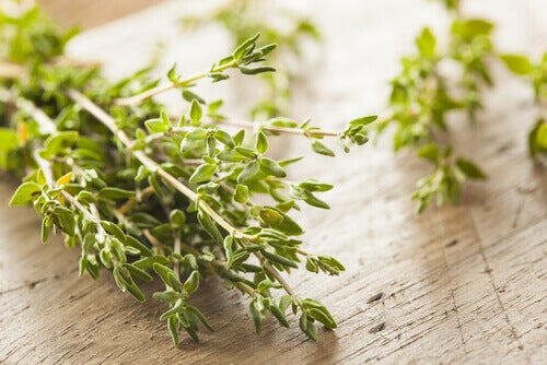 Tomilho, uma das ervas curativas para tratar intestino irritável