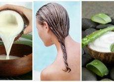 Queda de cabelo: tratamento de aloe vera e leite de coco