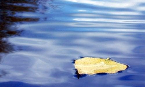 Folha na água