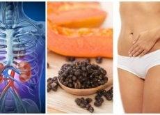6 benefícios das sementes de mamão