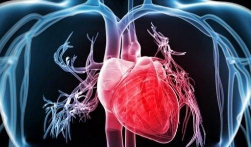 O consumo de brócolis fortalece o sistema cardiovascular