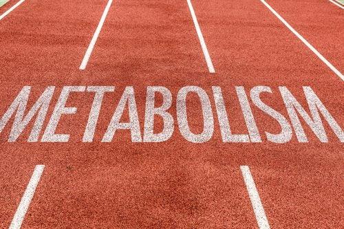 Gorduras afetam o metabolismo