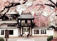 Sabedoria japonesa para sermos mais felizes no dia a dia