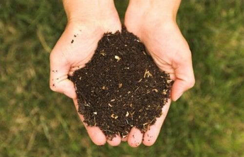 Fertilizantes para cultivo orgânico na pirâmide nutricional
