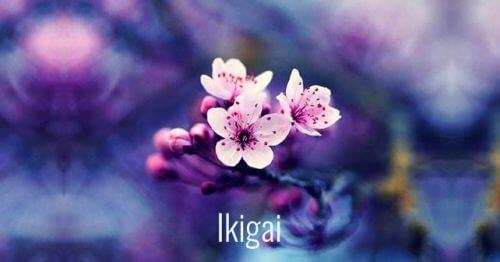 7 palavras japonesas que facilitarão seu crescimento pessoal. Maravilhosas!