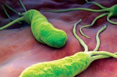 Como lutar contra a bactéria que causa queimação, diarreia e inchaço