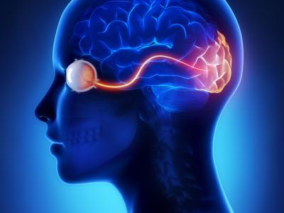 Conexão da visão com o cérebro