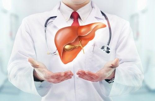 Médico mostrando fígado com insuficiência hepática