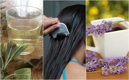 5 remédios à base de ervas para combater os piolhos e lêndeas naturalmente