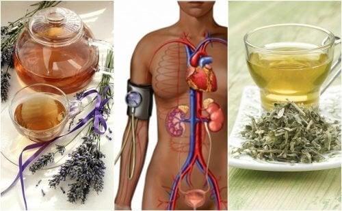 Reduza a pressão arterial com estes 5 remédios à base de ervas